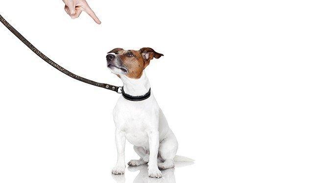 Předpoklady vzniku odpovědnosti za škodu způsobenou zvířetem, vč. soudních rozhodnutí